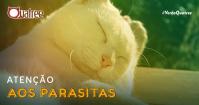 Atenção aos parasitas! Saiba como prevenir pulgas e carrapatos nos pets