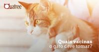 Vacinas para gatos: quais são e quando devem ser tomadas?
