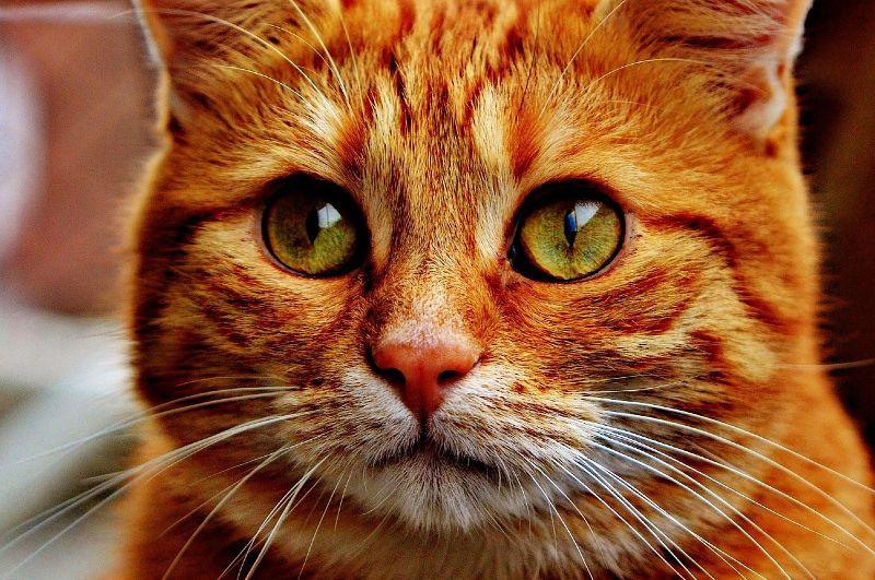 Entenda a mensagem que seu gato está passando para você