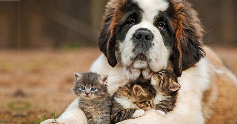 Cachorro e gatos felizes